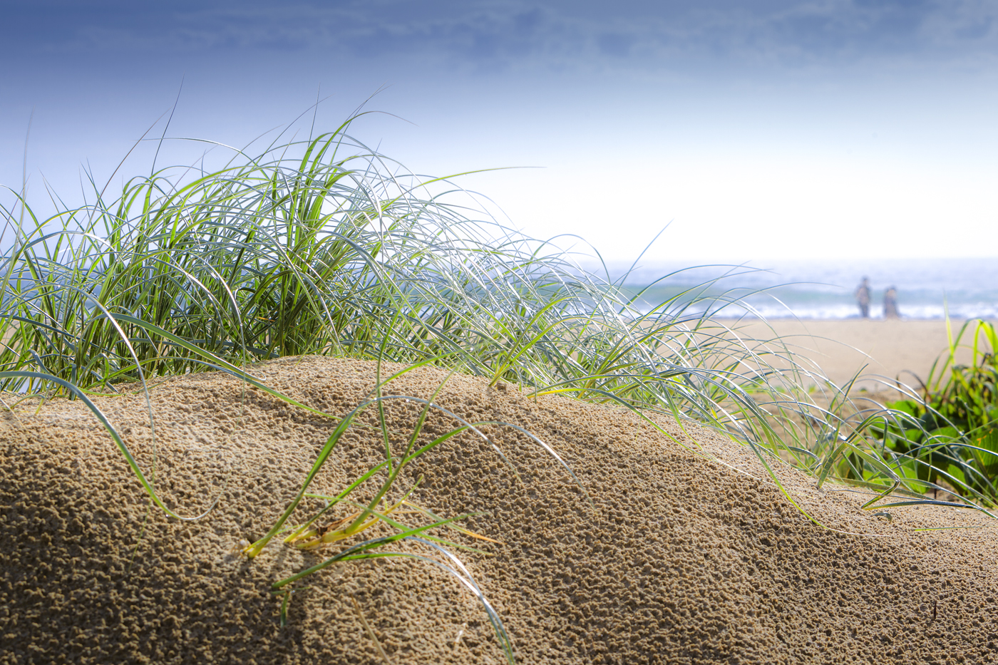 Dune-Grass-Copyright-Seen-Australia-001